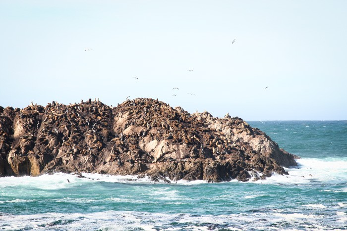 Bird Rock along the 17-mile-drive, Carmel, CA