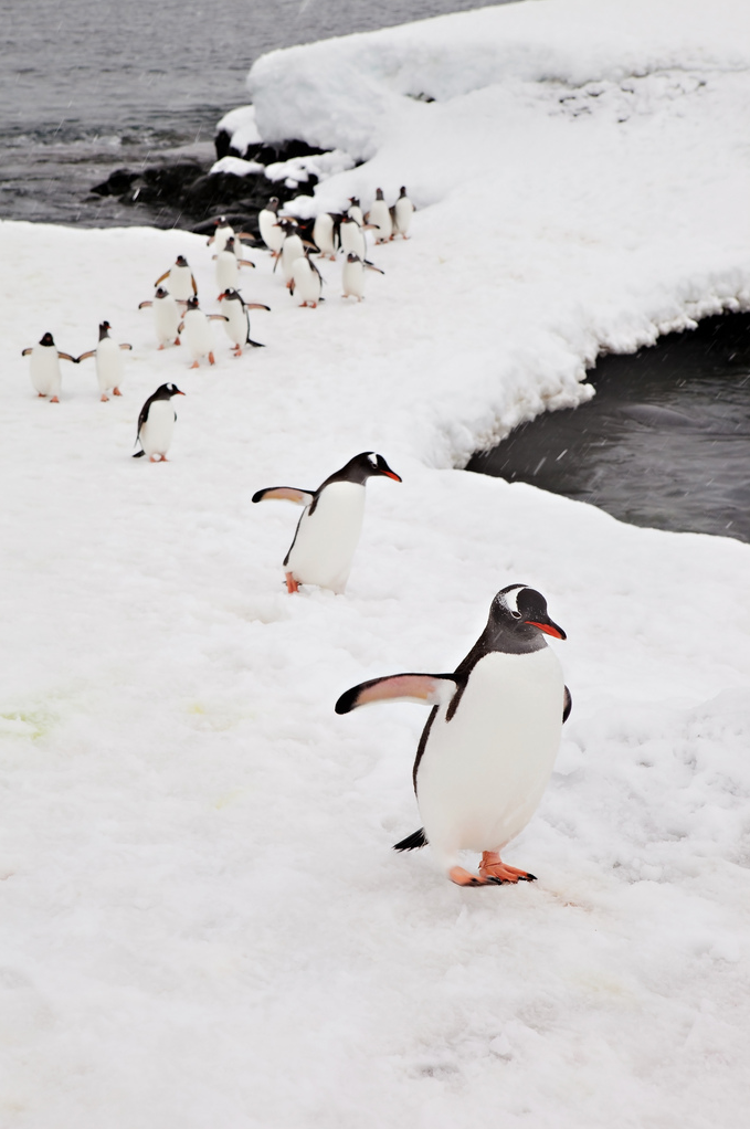 Antarctic Penguins by World Trekker